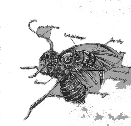 gp-drawing-fly